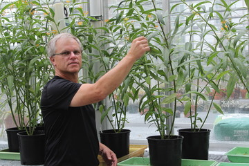 $1 Million Grant for Milkweed Study May Produce Medical Benefits