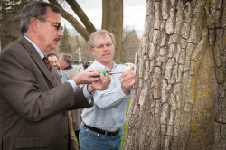 """Lofty Elm"" Highlights Arbor Day Event"