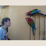 student with parrots.JPG