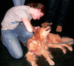 Dogs, Massages Offer Break from Finals Week