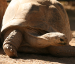 Professor to Discuss Giant Tortoise Conservation