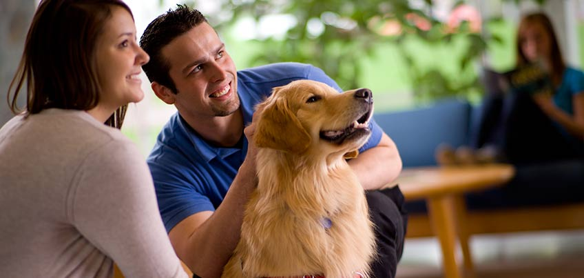 Academic Support and Acheivement Program dogs relieve stress
