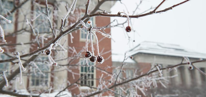 Winter tree berries frozen in front of Old Main