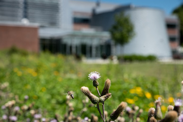 SUNY Cortland Recognized Nationally for Sustainability