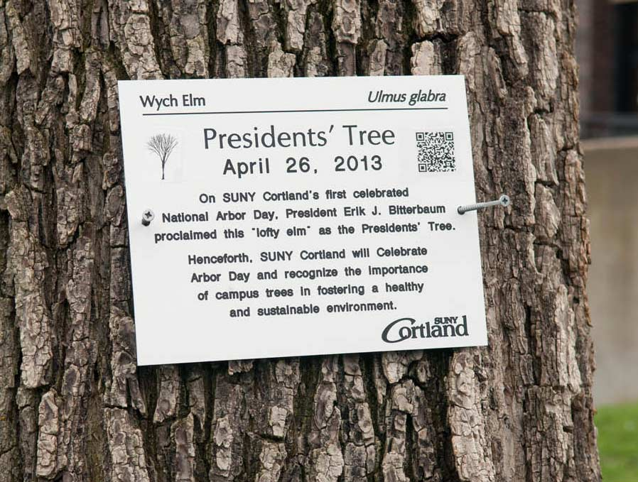 "Presidents' Tree - ""Lofty Elm"""