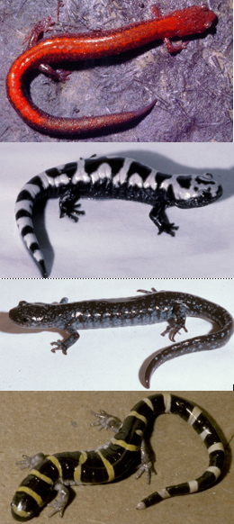 samples from the world of herps