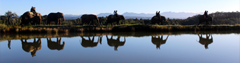 Scholarships and Funding link - Panoramic of students riding elephants by the water in Africa