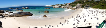 Other-SUNY Programs link - Panoramic of penguins on a beach in South Africa