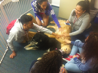 Five students encircle a dog on the floor. Each student playfully pets the dog's stomach.